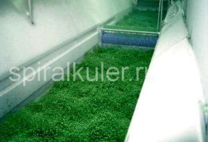 флюидизация зеленого горошка